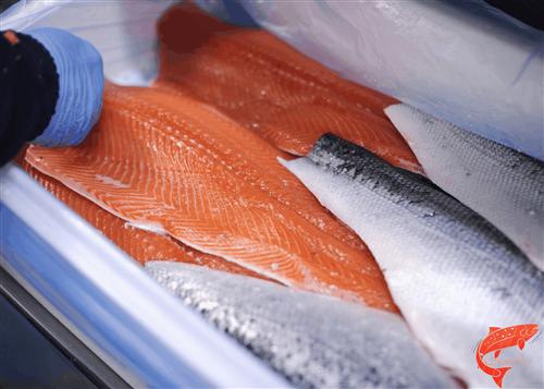 فروشگاههای معتبر عرضه ماهی سالمون تازه